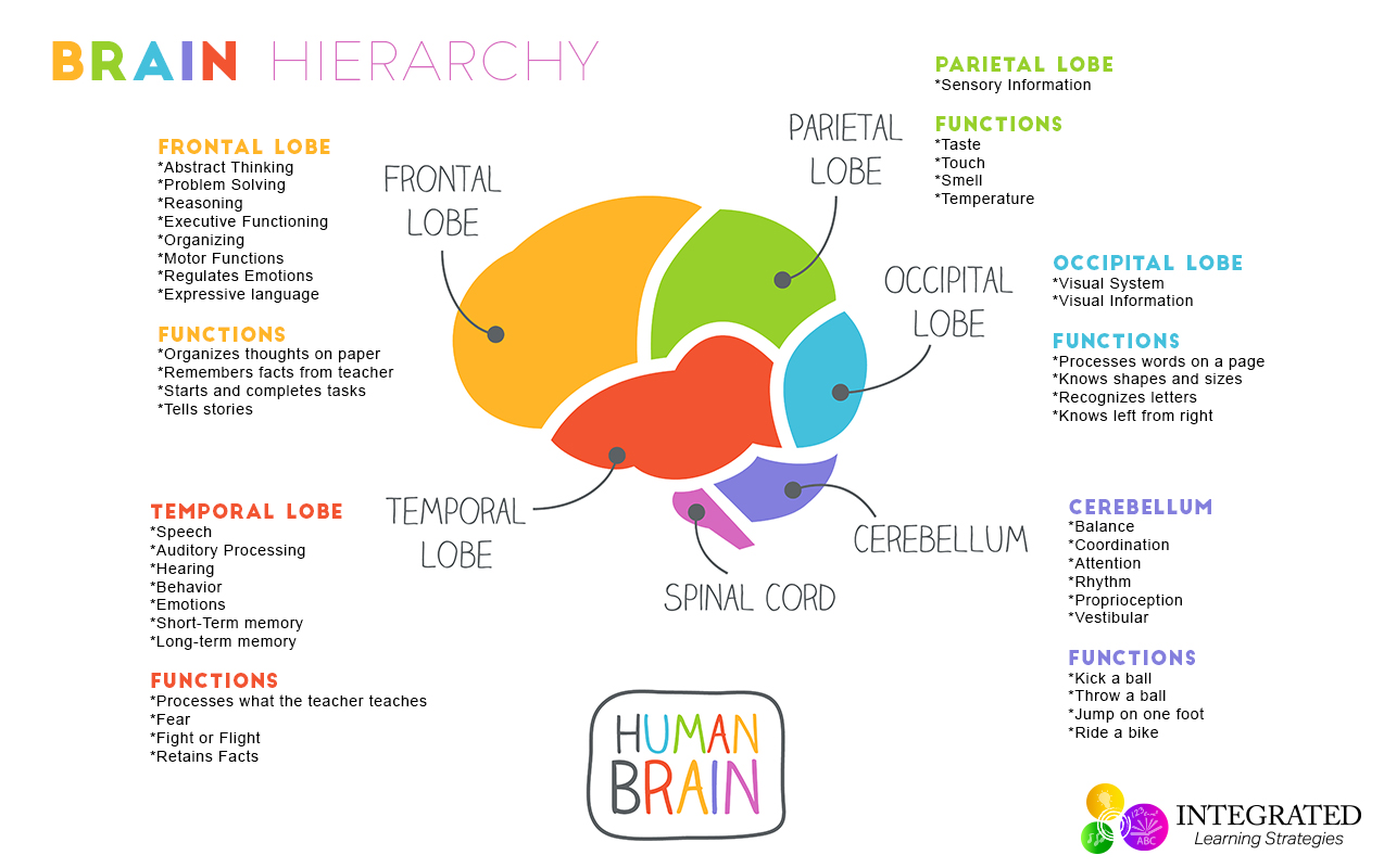 Brain Hierarchy: When Your Child's Lower Brain Levels Are ...